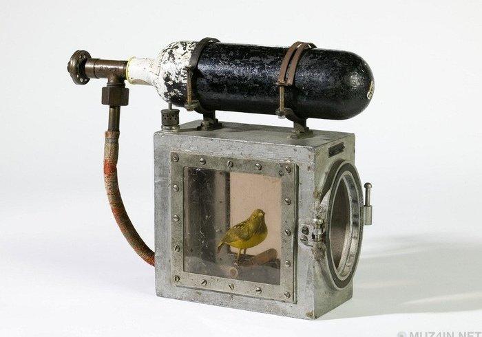 Реаніматор канарок (фото)