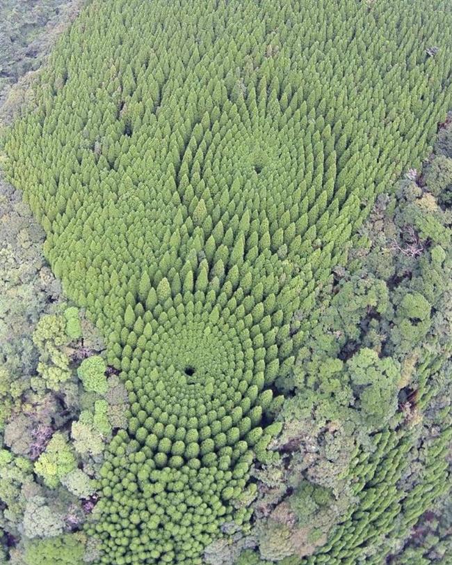 «Круги на полях» - японський експеримент (фото)