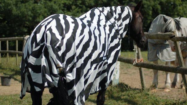 Чому зебри смугасті?