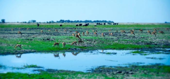 Нілоти - коли у тебе замість двору болото (фото)