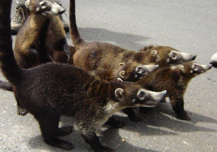 Тварини, яких ви точно не бачили ніколи раніше (фото)