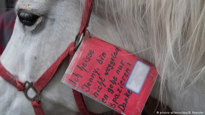 Самостійна конячка Дженні (фото)