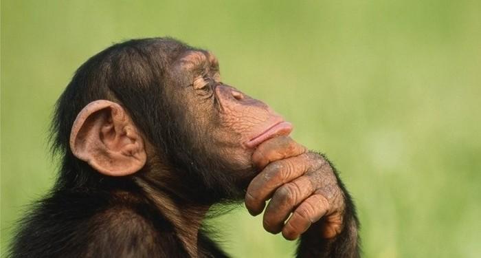 Відео з шимпанзе, який освоїв інстаграм, вразило інтернет-користувачів