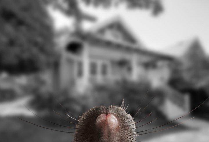 Як тварини бачать світ? (фото)