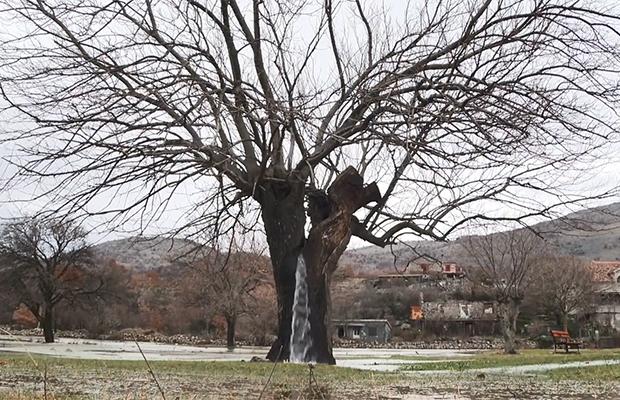 Фонтан з дерева - рідкісне природне явище в Чорногорії (фото)