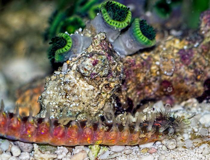 Найгостріші голки в природі (фото)