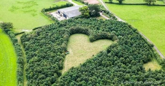 Найдивовижніше освідчення в коханні (фото)
