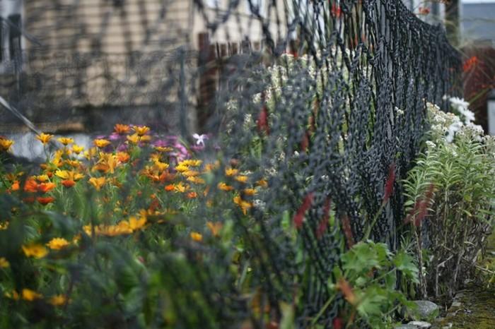 В'язаний паркан - чудове рішення для палісадника (фото)