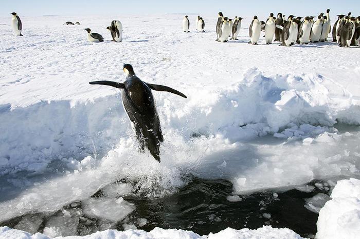 7 неймовірних фактів про Антарктиду, які на 100% є правдою (фото)