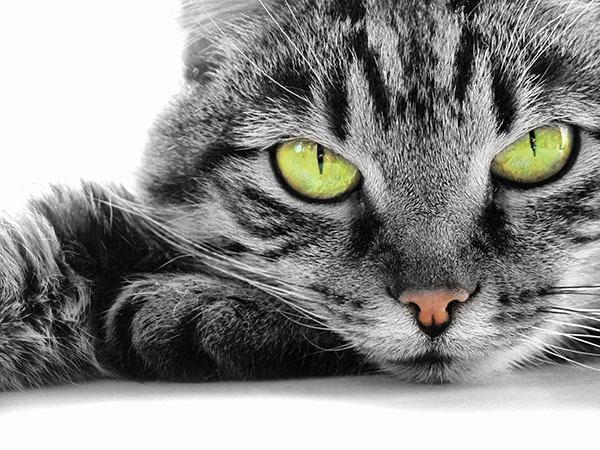 Чим кішка відрізняється від собаки?