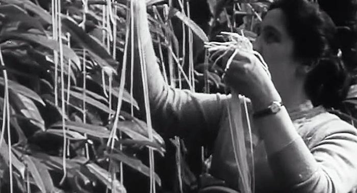 Історія одного фейку про спагеті (відео)