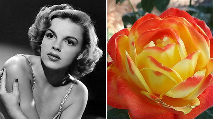 Троянда «Мерілін Монро», павук «Анджеліна Джолі», гагодон на честь Леді Гаги та інші