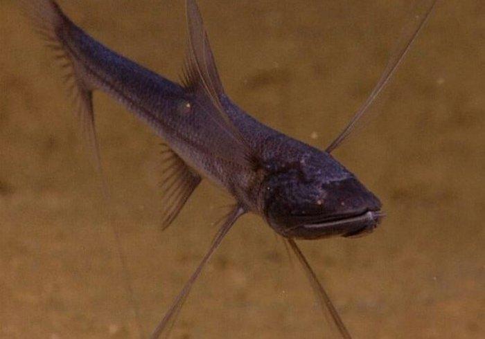 Рибка на ніжках-підпорках (фото)