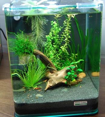 Як завести простий акваріум. Поради фахівця