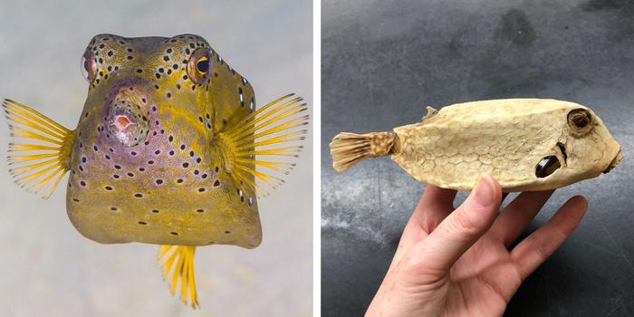 П'яні голуби, риба, що живе на суші, равлик з гарпуном і ще 8 дивовижних тварин (фото)