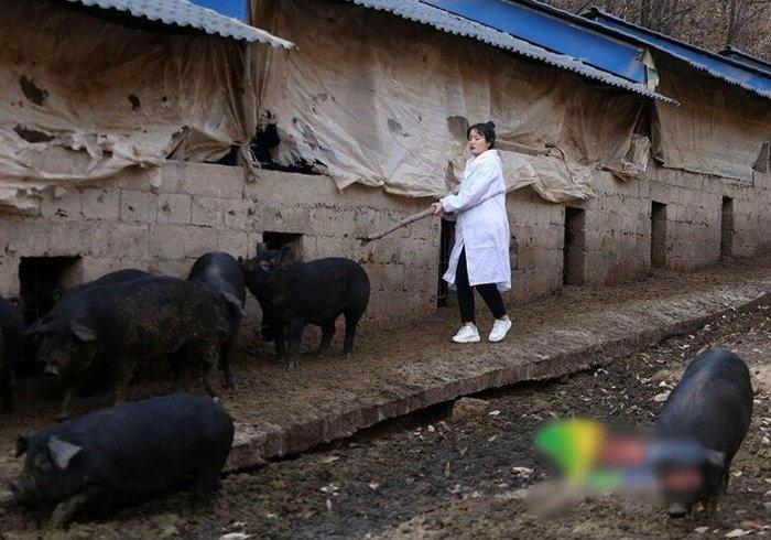 Дружина-красуня і придане в 300 свиней