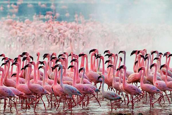 Озеро мільйонів рожевих фламінго (фото)