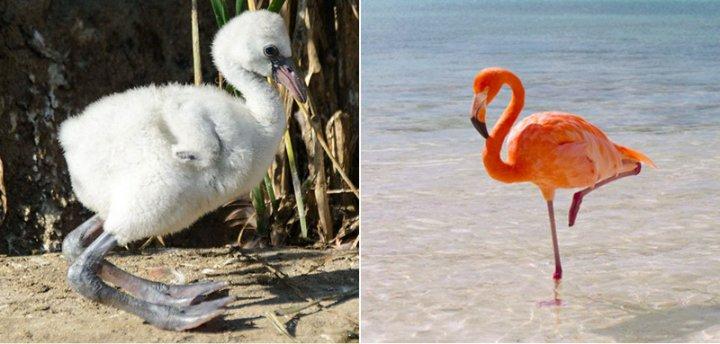 Пташенята та дорослі птахи (фото)