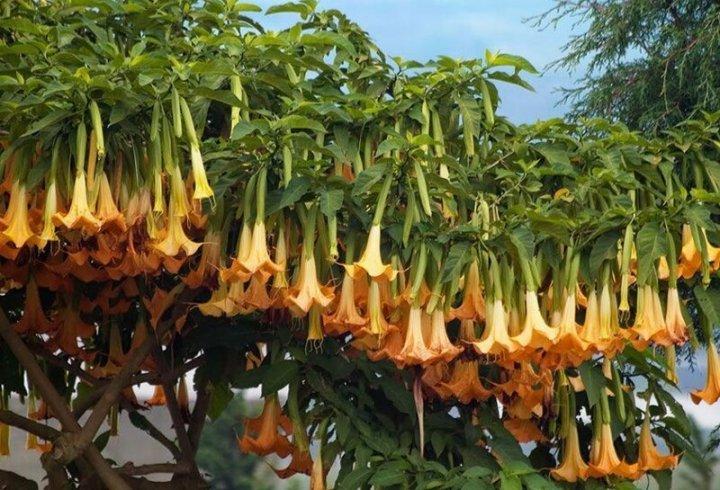 15 найнебезпечніших рослин на планеті (фото)
