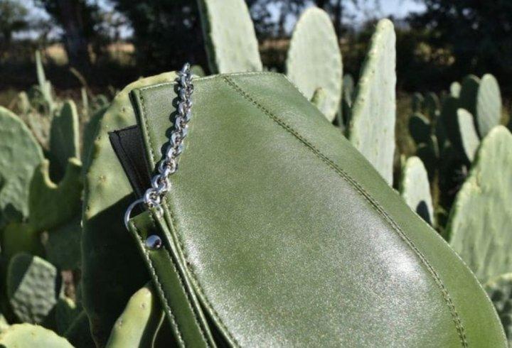 Стартап виготовляє штучну шкіру з кактусів (фото)