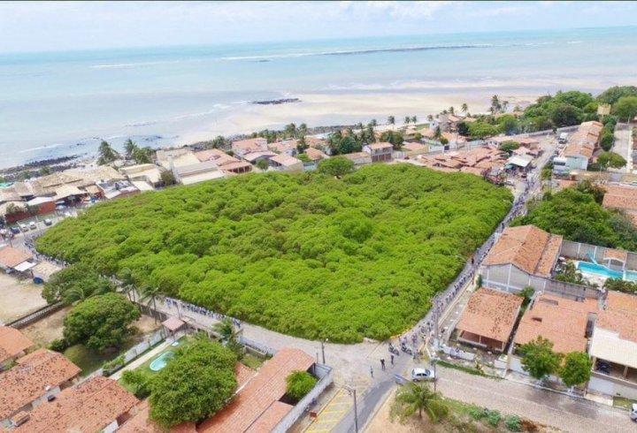 Окреме дерево в Бразилії виглядає як мініатюрний ліс (фото)
