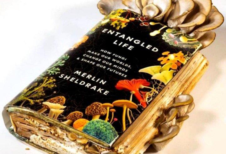 Біолог з'їв гриби, які виростив на своїй книжці про гриби