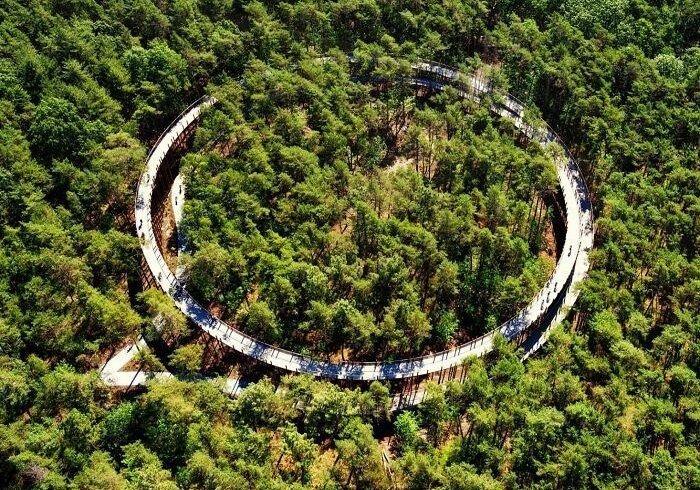Велодоріжка на висоті 10 метрів над лісом в Бельгії (фото)