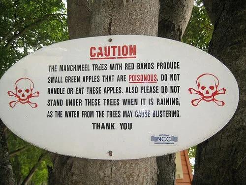 Найнебезпечніше дерево на планеті. Не можна рубати, не можна палити, не можна перебувати поруч