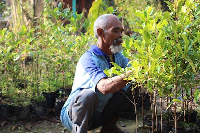 Індонезієць самостійно висадив понад 11 тисяч дерев, перетворивши посушливі пагорби в зелений оазис (фото)