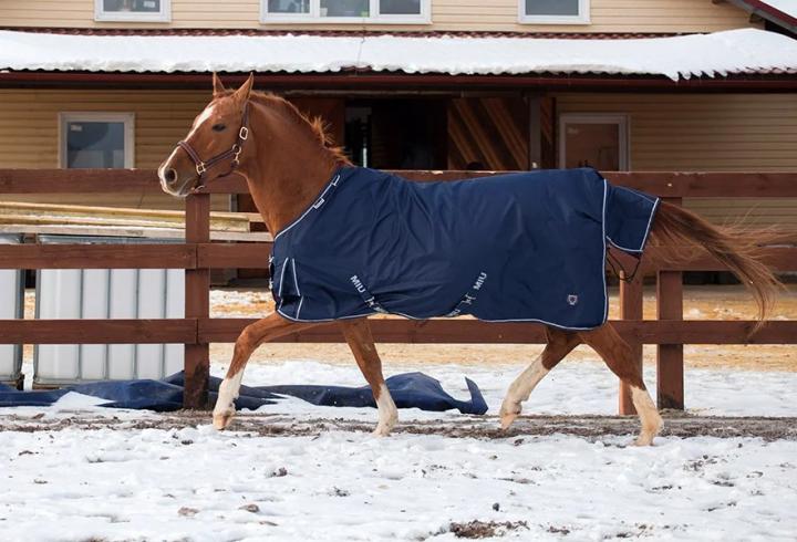 Навіщо голять коней? (фото)