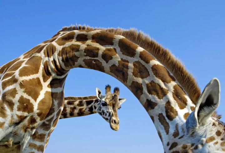 Поза законом: 6 організмів, які не повинні були б існувати