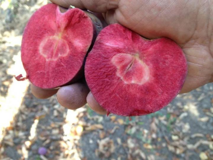 Сім сортів яблук, які ви навряд чи пробували (фото)