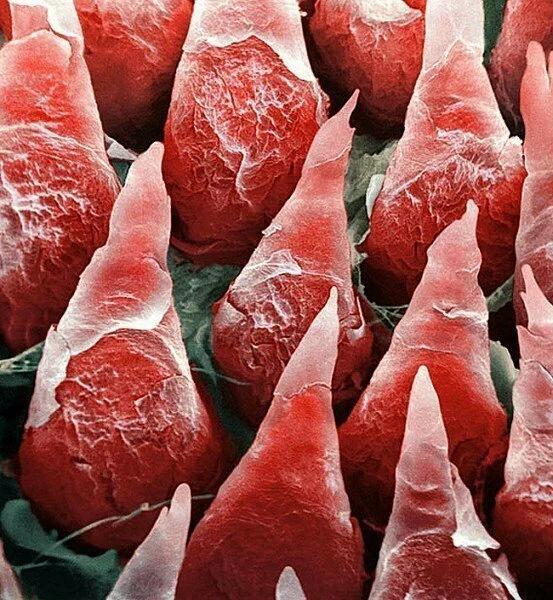 Звичайні речі під мікроскопом (фото)