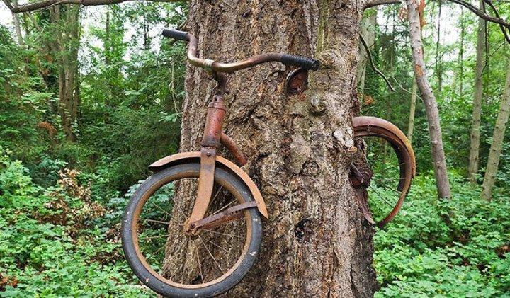 Що приховує легенда велосипеда в дереві? (фото)