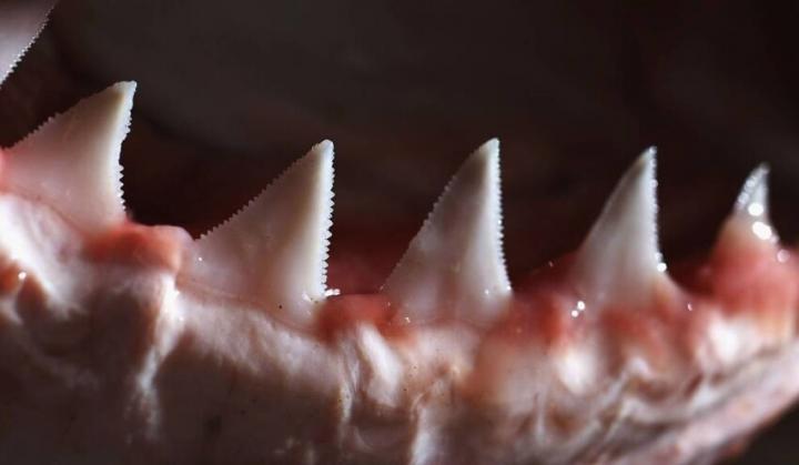 Як виглядають зуби різних тварин (фото)
